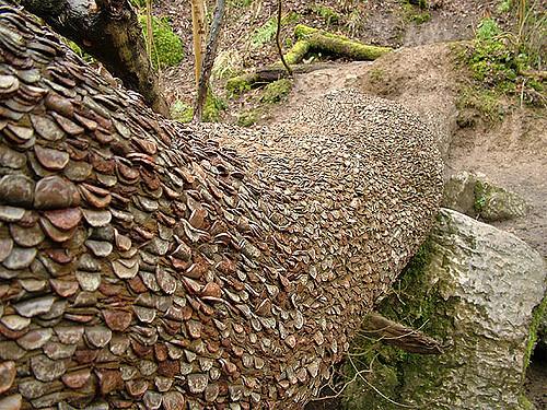 дърво на парите